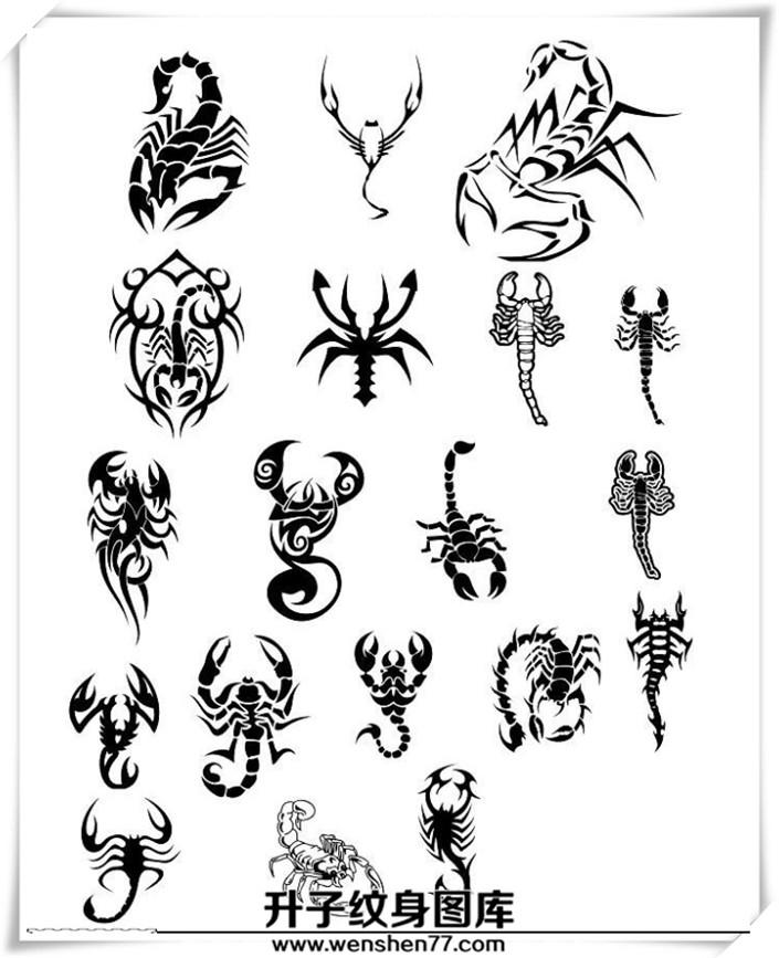 蝎子纹身图案