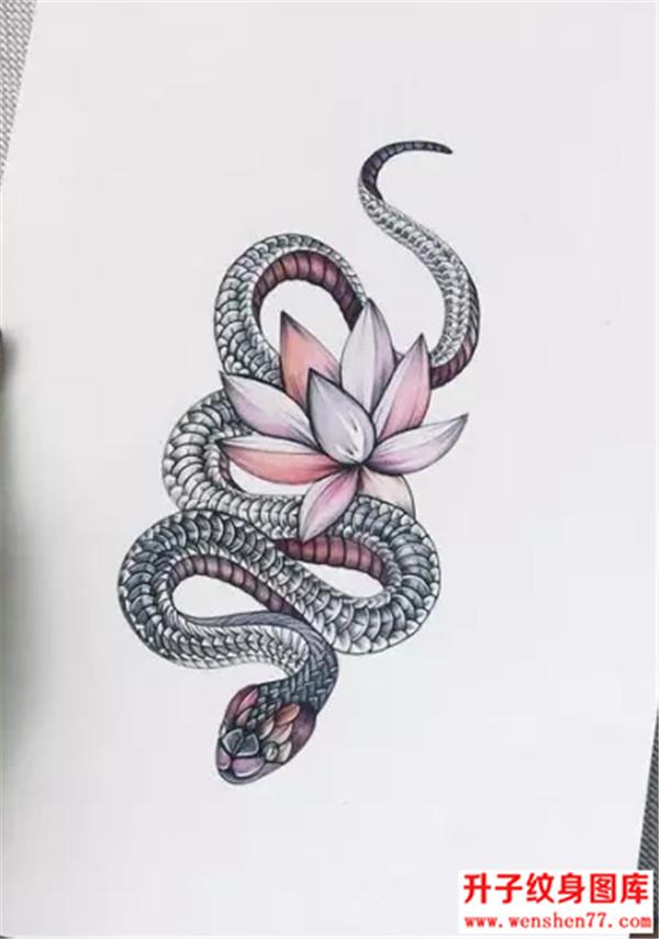 蛇纹身-蛇纹身手稿图案大全-蛇纹身图片