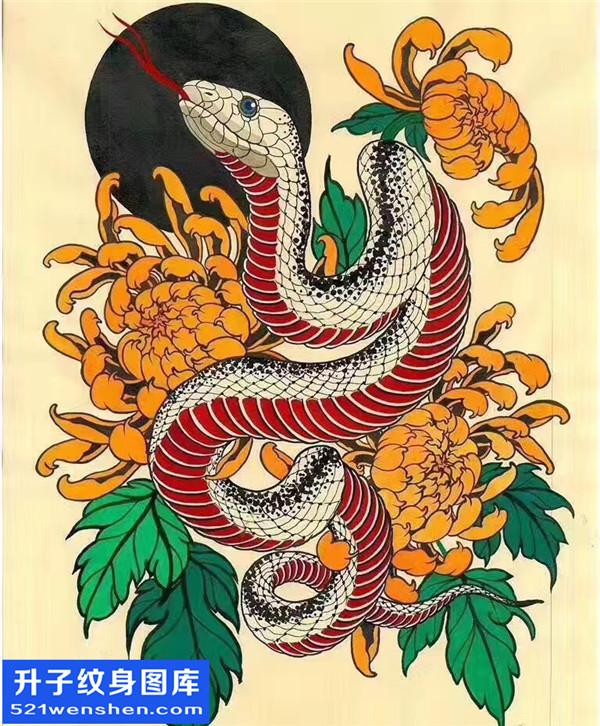 菊花蛇纹身手稿图案大全 - 解放碑纹身