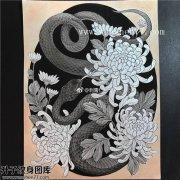 蛇菊花纹身手稿